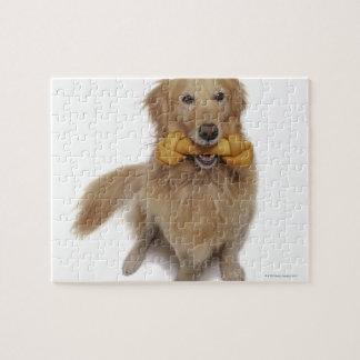Perro del golden retriever que sostiene el hueso e rompecabeza con fotos
