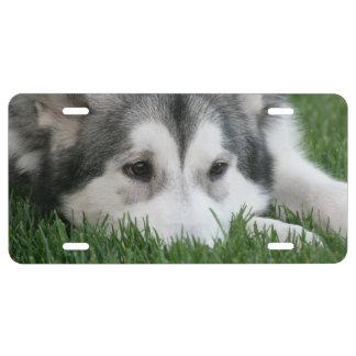 Perro del husky siberiano placa de matrícula
