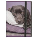 Perro del labrador retriever del chocolate soñolie