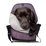 Perro del labrador retriever del chocolate soñolie bolsas de mensajeria
