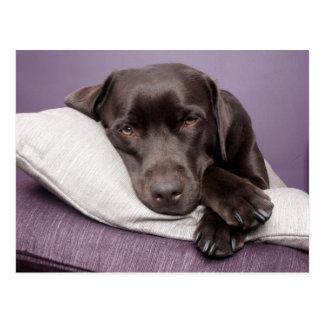 Perro del labrador retriever del chocolate soñolie postal