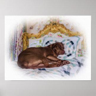 Perro del labrador retriever, durmiendo, impresión posters