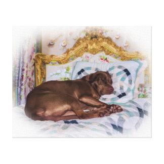 Perro del labrador retriever, durmiendo lona estirada galerias