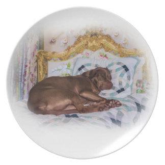 Perro del labrador retriever, durmiendo, placa platos