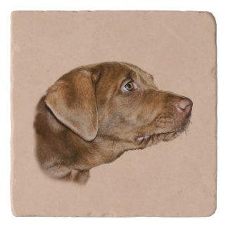Perro del labrador retriever, personalizable salvamanteles