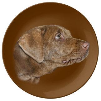Perro del labrador retriever plato de cerámica