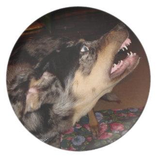 Perro del leopardo de Catahoula que muestra los di Plato