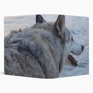 """Perro del lobo en el lago NY Cayuga Carpeta 1"""""""