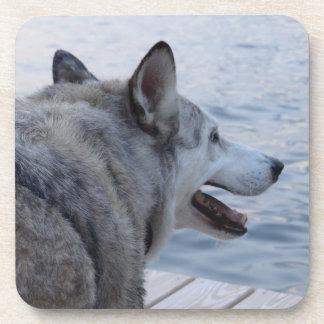 Perro del lobo en el lago NY Cayuga Posavaso