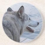 Perro del lobo en el lago NY Cayuga Posavasos Para Bebidas