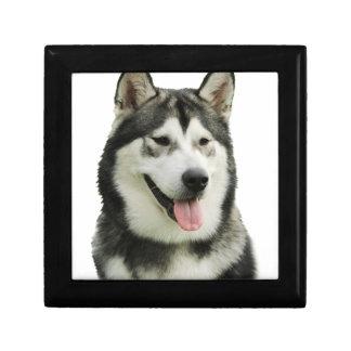 Perro del Malamute de Alaska Caja De Recuerdo