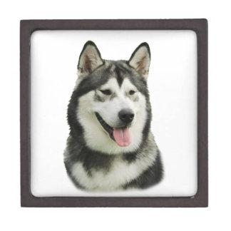 Perro del Malamute de Alaska Caja De Recuerdo De Calidad