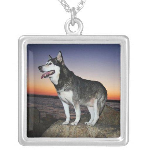 Perro del Malamute de Alaska en la puesta del sol Colgante Cuadrado