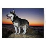 Perro del Malamute de Alaska en la puesta del sol Tarjetón