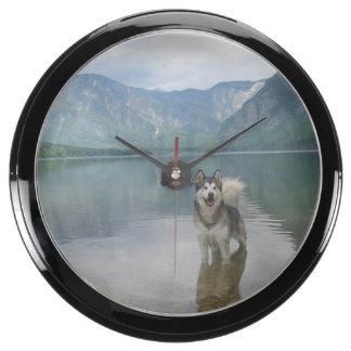 Perro del Malamute de Alaska Relojes Acuario