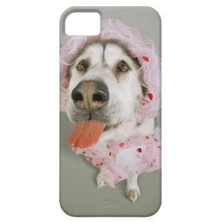 Perro del Malamute que lleva un tutú y que se pega iPhone 5 Carcasa