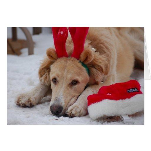 Perro del navidad tarjeta