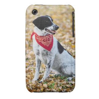 Perro del otoño iPhone 3 Case-Mate carcasa