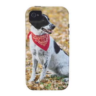 Perro del otoño iPhone 4 carcasa