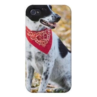 Perro del otoño iPhone 4/4S carcasa