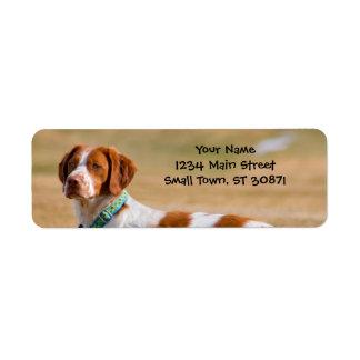 Perro del perro de aguas de Bretaña hermoso Etiqueta De Remitente