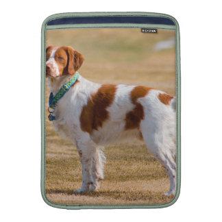Perro del perro de aguas de Bretaña hermoso Funda MacBook