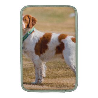 Perro del perro de aguas de Bretaña hermoso Funda Para Macbook Air