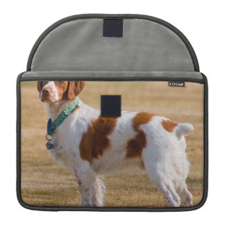 Perro del perro de aguas de Bretaña hermoso Funda Para Macbook Pro