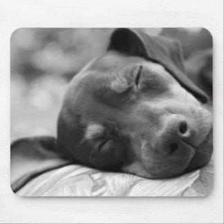 Perro del Pinscher miniatura el dormir Mouse Pads