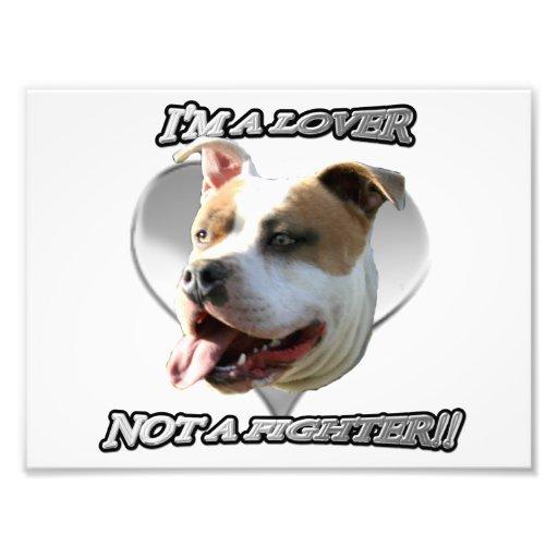 Perro del pitbull del amante de I'ma Impresión Fotográfica