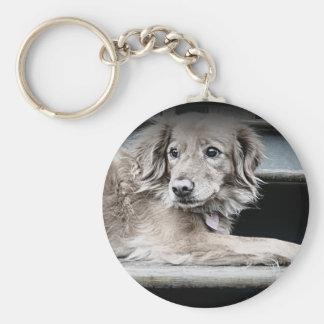 Perro del pórtico en pasos con los ojos tristes llaveros