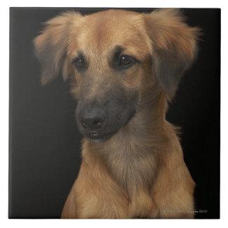 Perro del resuce de Brown con la nariz negra en ne Azulejo Cuadrado Grande