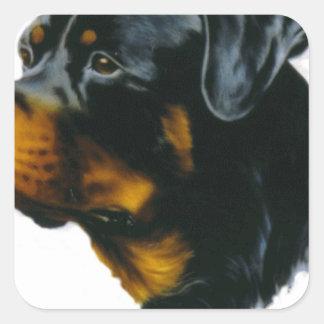 perro del rottweiler pegatina cuadrada