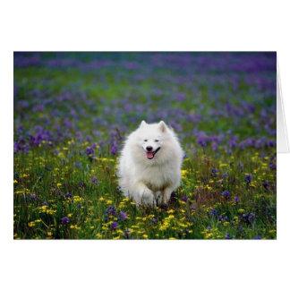 Perro del samoyedo tarjetón