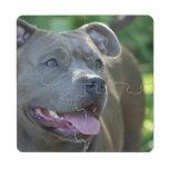 Perro del terrier de Pitbull