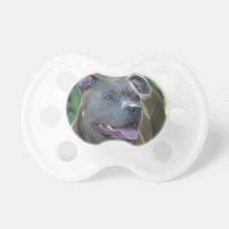 Perro del terrier de Pitbull Chupete De Bebe