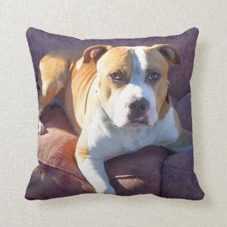Perro del terrier de Pitbull Almohadas