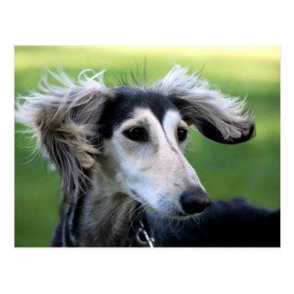 Perro del viento postal