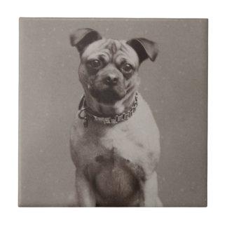 Perro del vintage azulejo cuadrado pequeño