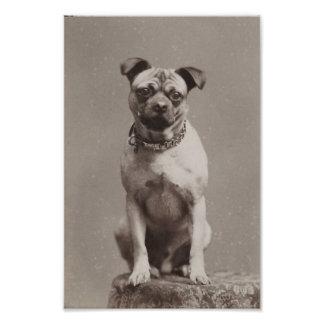 Perro del vintage fotografía