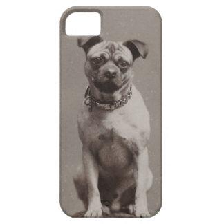 Perro del vintage iPhone 5 protectores