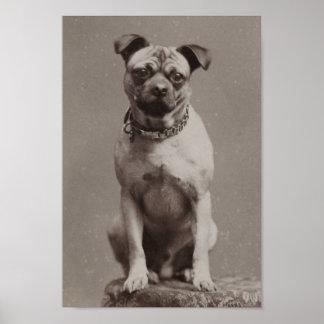 Perro del vintage impresiones