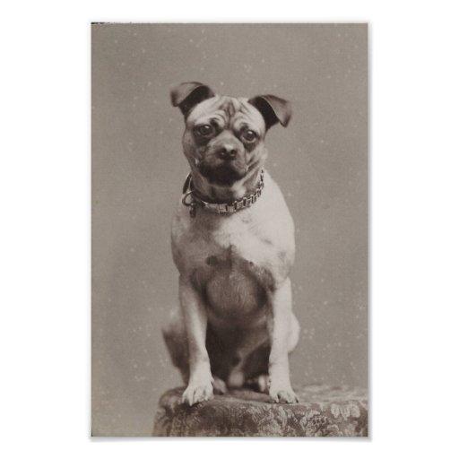 Perro del vintage arte fotográfico