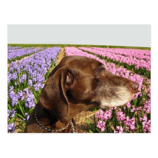 perro delante de un campo de flor de la primavera tarjeta postal