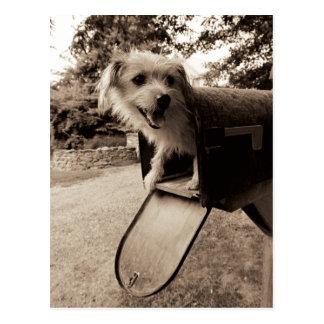 Perro dentro de un buzón tarjetas postales