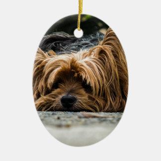 Perro desaliñado que coloca adorno navideño ovalado de cerámica