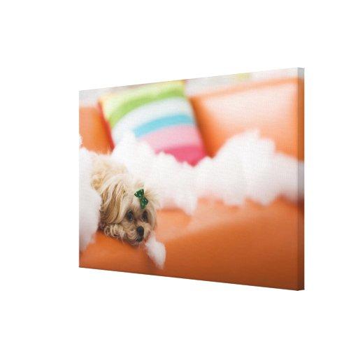 Perro destructivo impresión en lienzo estirada