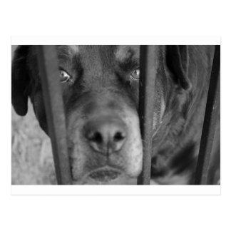 Perro detrás de barras tarjetas postales