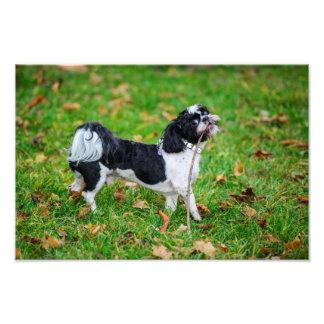 Perro divertido blanco y negro arte con fotos