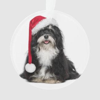Perro divertido de Havanese del navidad con el